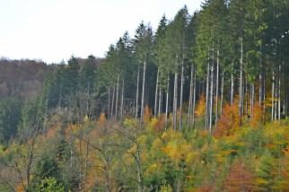 bf-trees