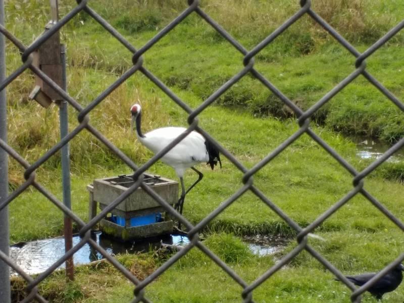 Crane in Crane Sancturary