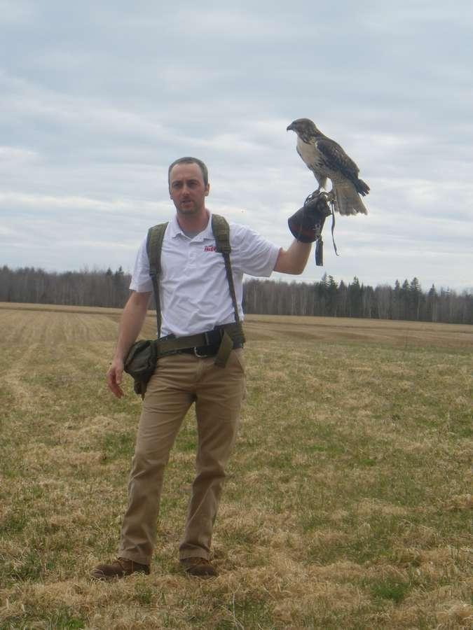 Falconry tour