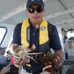 Freshly caught crab