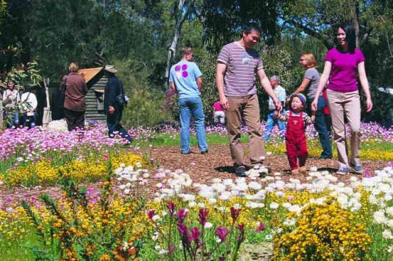 Perth Wildflowers