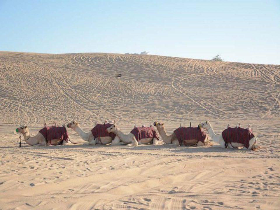 the uae desert