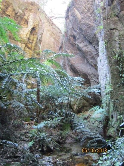 My favourite! See those ferns - they are rare King Ferns, their fronds held up by water pressure, like a fireman's hose.