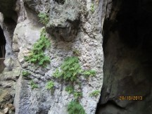 Rare ferns found on the walls just outside these caves.