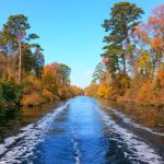 The Dismal Swamp