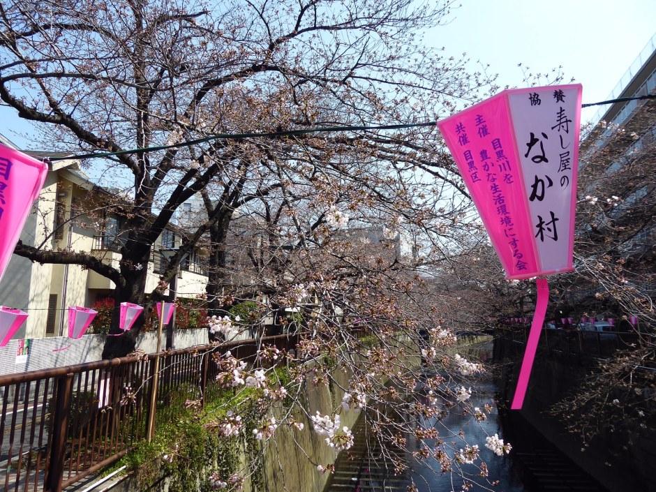Nakemeguro Cherry Blossom