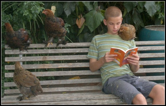 Reading with Chickens