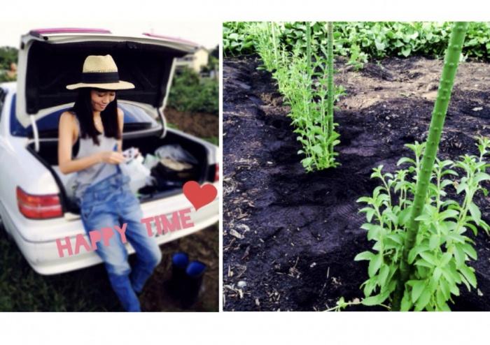 彩野菜写真