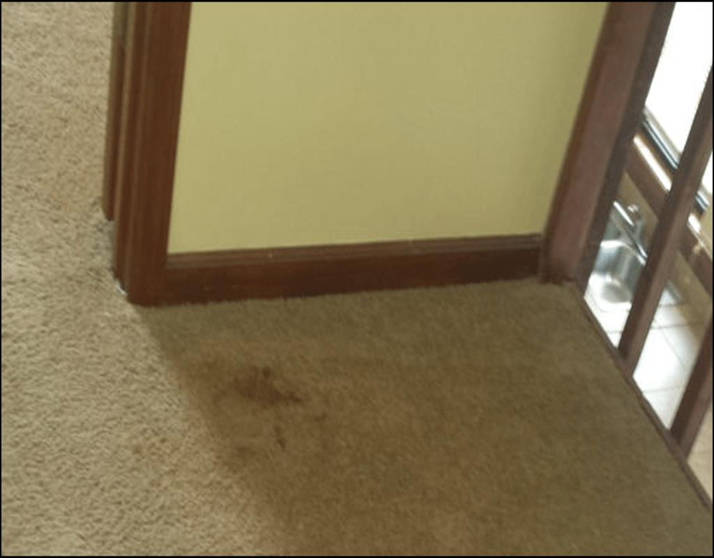 Carpet Cleaning Acworth Ga