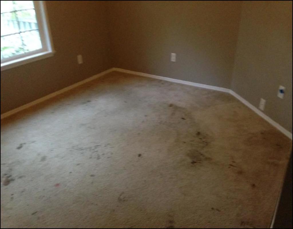 Carpet Cleaning Jackson Tn