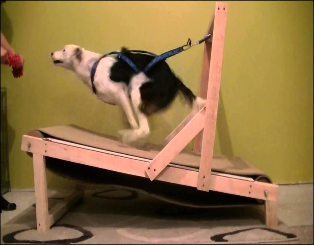 Carpet Mill Dog Training
