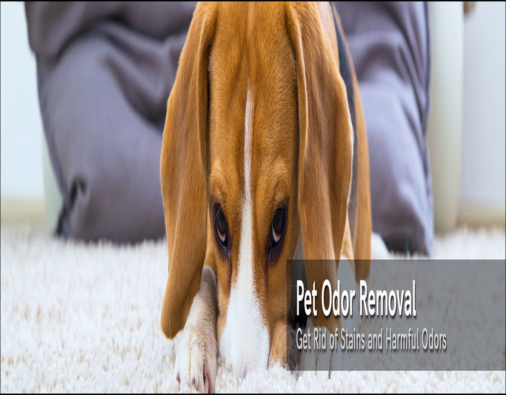 Carpet Cleaning Greenville Nc