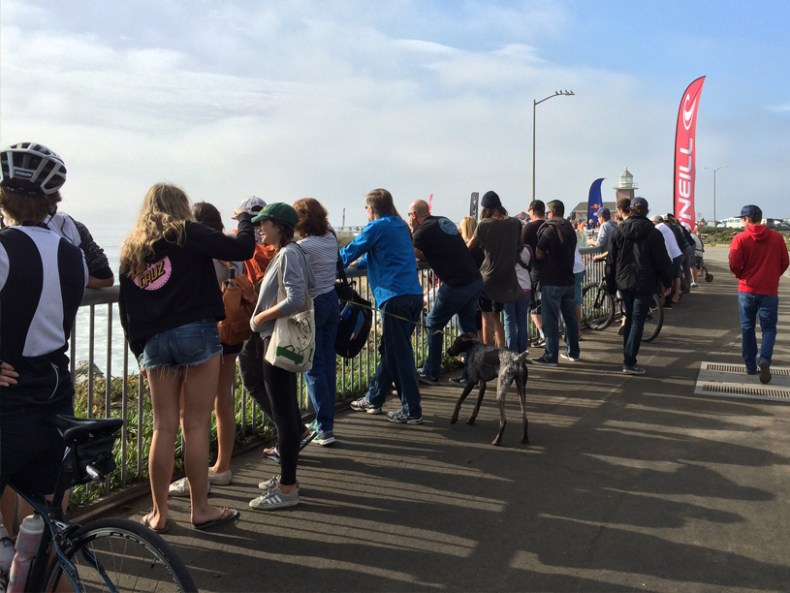People were lining up all along West Cliff to check in on the surfing.