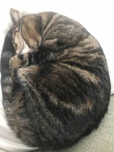 Peggy's spherical cat