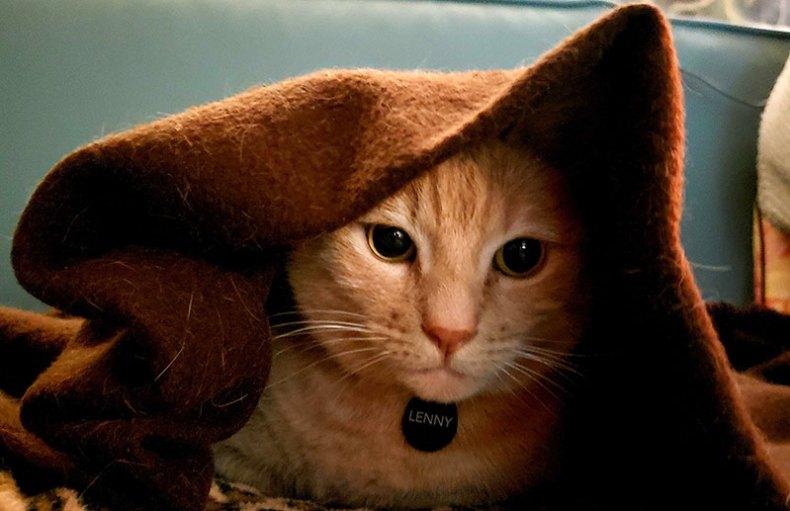 Mark's cat Lenny under a blanket