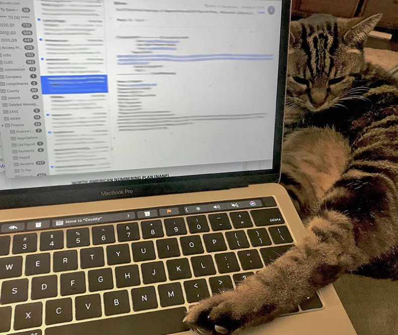 cat on keyboard