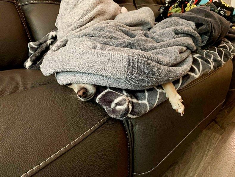 Murray under blankets