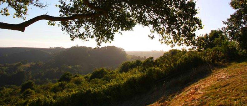 Bonny Doon View