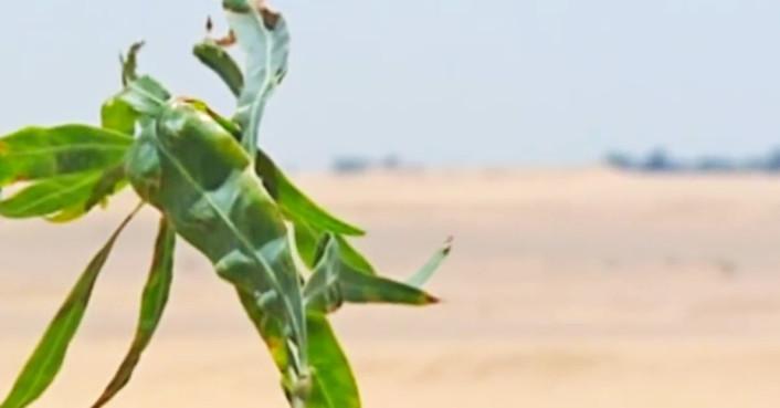 egypt forest desert sewage