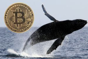 Whales On The Move: Somebody Just Transferred $193 Million Worth Of Bitcoins From A Billion-Dollar Wallet
