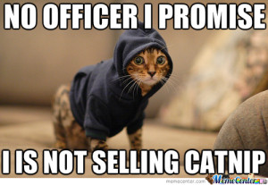drug dealer kitty