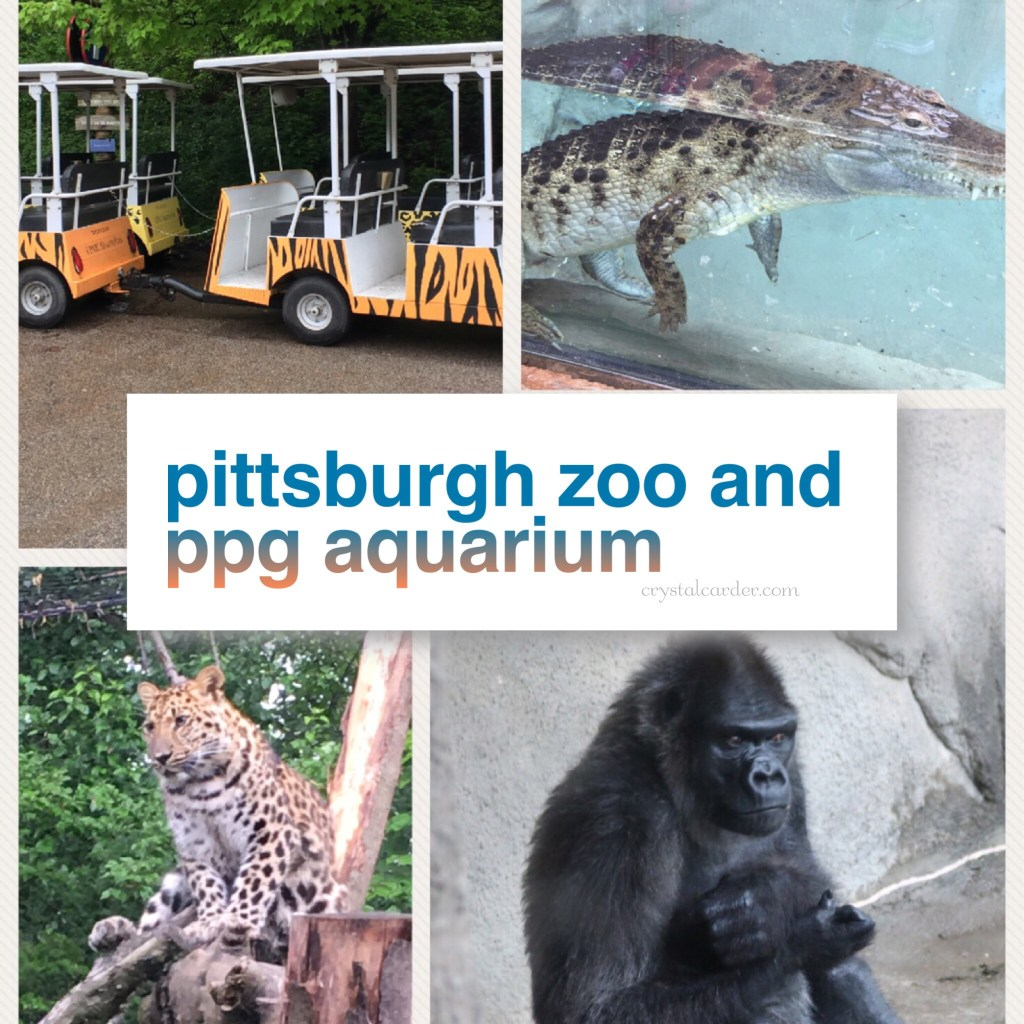 The Most Fun We've Had In Pittsburgh At The Pittsburgh Zoo And PPG Aquarium 82