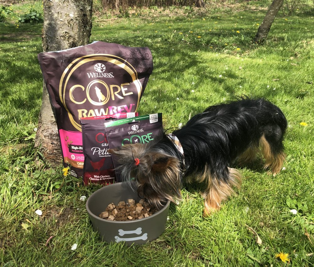 Wellness CORE Small Breed Dog Food is Perfect for Little Dogs Like Teddy 75