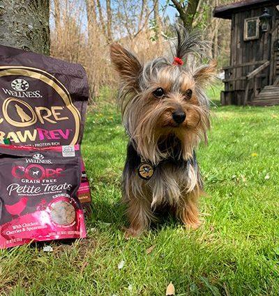 ad Teddy love Wellness CORE Small Breed Pet Food