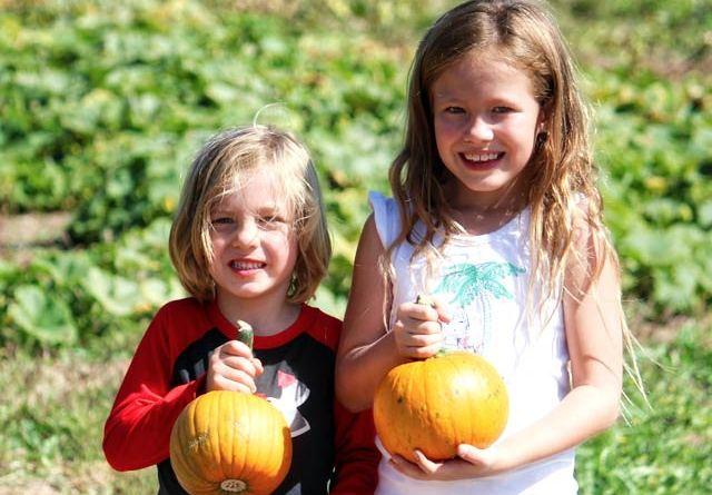 Mortimer Farms Pumpkin Festival and Corn Maze Returns
