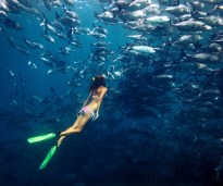 Young lady divin by the school of Jack fish on the single breath