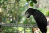 Mantouf, Mona's guard bird.