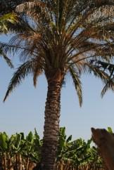 The first palm tree I've ever climbed