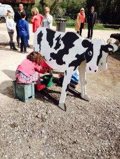 Learn to milk a cow!