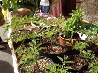 Seedlings for your own patch