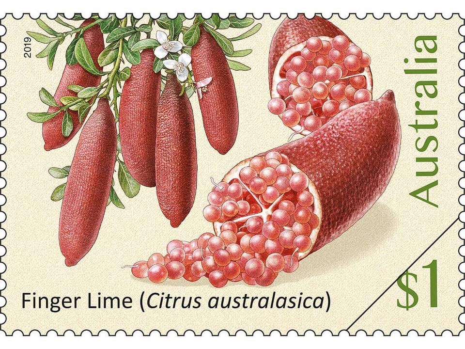 A stamp featuring a finger lime