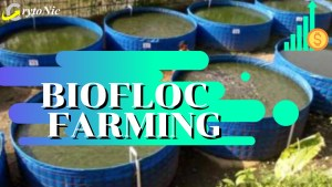 """Read more about the article Biofloc 