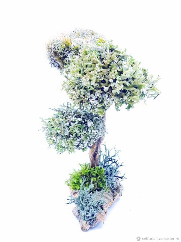 Сувенирное дерево с кронами из цетрария (исландский мох ...