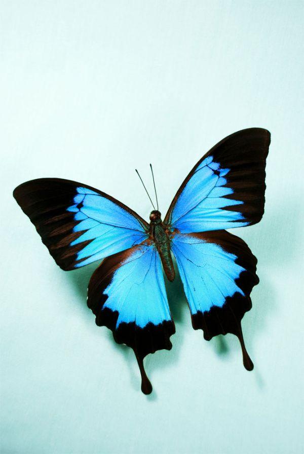 Фото для вдохновения: прекрасные бабочки | Журнал Ярмарки ...