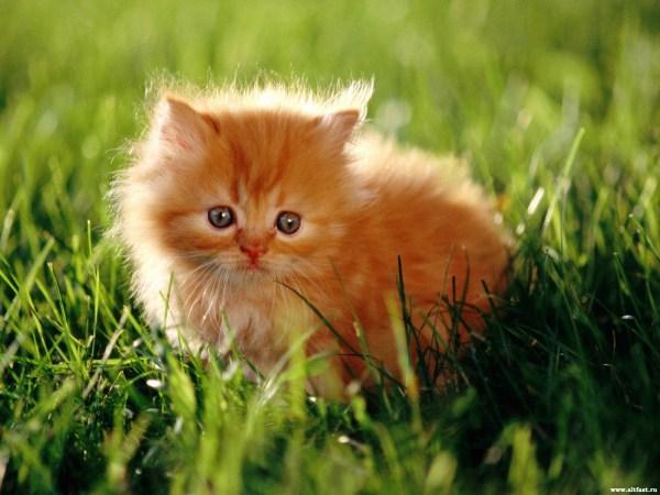 Картинки Про Котят