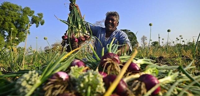किसानों के लिए मुख्यमंत्री प्याज प्रोत्साहन योजना मध्य प्रदेश