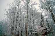 Snow Coated by Maren