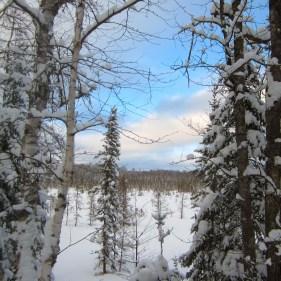 Snowy View by Maxim