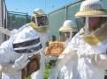 Looking for the queen bee