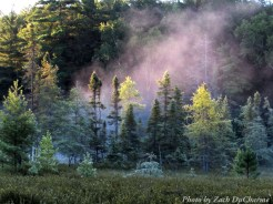 14-08-25 fog bog by DuCharme