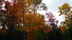 14-09-20 Autumn Color 9
