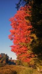 14-09-26 Autumn Color 17