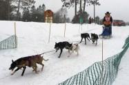 16-02-07 3Bear 6dog 08 Racer 44