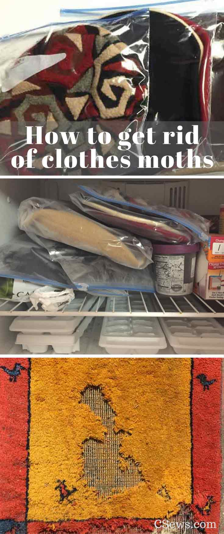 How to get rid of clothes moths - freeze garments to kill moth eggs, trap adult moths, and clean everything