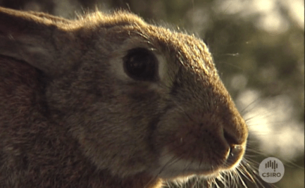 Close up view of rabbit.