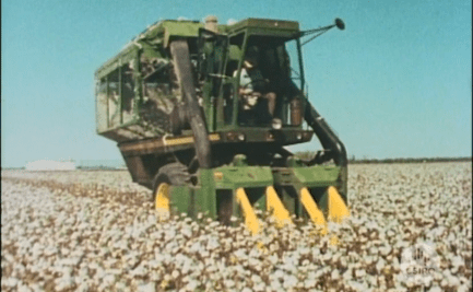 Cotton harvester in field of cotton.